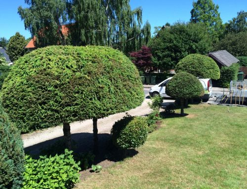 Havearbejde og Hækkeklipning – Case 7